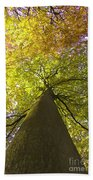 View To The Top Of Beech Tree Beach Towel