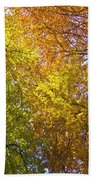 View To The Top Of Beech Trees Beach Towel