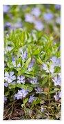 Vinca Violet Purple Clump Beach Towel