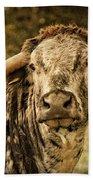 Vintage Longhorn Cattle Beach Towel