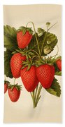 Vintage Strawberries Beach Towel