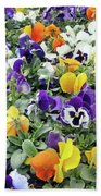 Viola In The Spring Are Especially Beautiful. Beach Towel