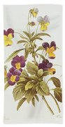 Viola Tricolour  Beach Towel by Pierre Joseph Redoute