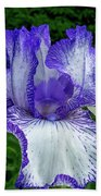 Violet Iris Beach Towel