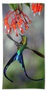 Violet-tailed Sylph Feeding Beach Towel