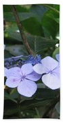 Violets O The Green Beach Towel