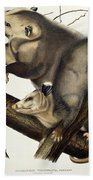 Virginian Opossum Beach Towel