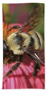 Visitor Up Close Coneflower  Beach Towel