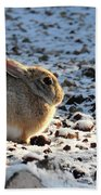 Wabbit Beach Towel