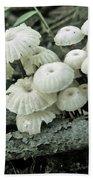 Wagon Wheel Mushroom Colony Beach Towel