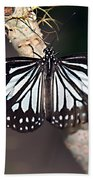 Waiting --- Rice Paper Butterfly Beach Towel