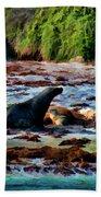 Warm And Fuzzy  Beach Towel by Douglas Barnard