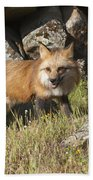 Wary Red Fox Beach Towel