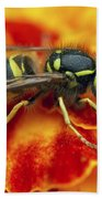Wasp In The Bloom Beach Towel