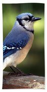 Watchful Blue Jay Beach Towel