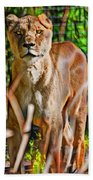 Watchful Lioness Beach Towel