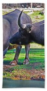 Watching 2 Water Buffalos 1 Water Buffalo Watching Me Beach Towel