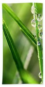 Water Drops On Spring Grass Beach Towel