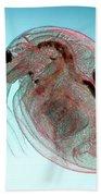Water Flea Daphnia Magna Beach Sheet