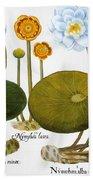 Water Lily, 1613 Beach Sheet