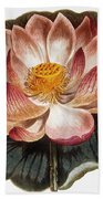 Water Lily, 1806 Beach Towel