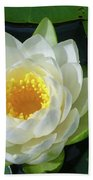 Water Lily 3437 Beach Towel