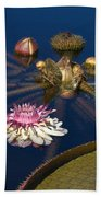 Water Lily And Platters Beach Towel