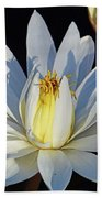 Water Lily At Dusk Beach Towel