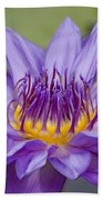 Water Lily Director George T Moore Beach Towel