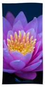 Water Lily Of The Dawn Beach Towel