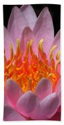 Water Lily On Fire Beach Towel