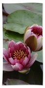Water Lily With Bee Beach Sheet