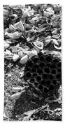 Water Lotus And Shells In Bw Beach Towel