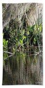 Water Reeds And Spanish Moss Beach Towel