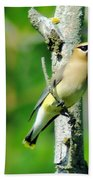 Wax Wing In A Small Branch  Beach Towel