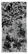 Waxleaf Privet Blooms On A Sunny Day In Black And White - Color Invert Beach Towel