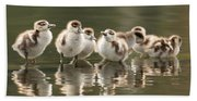 We Are Family - Seven Egytean Goslings In A Row Beach Towel