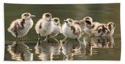 We Are Family - Seven Egytean Goslings In A Row Beach Sheet