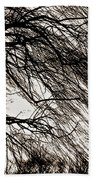 Weeping Willow Tree  Beach Towel