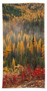 Western Larch Forest Autumn Beach Towel