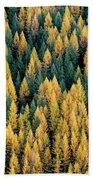 Western Larch Forest Beach Towel