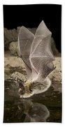 Western Long-eared Myotis Drinking Beach Towel