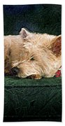 Westie Nap Beach Towel