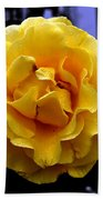 Wet Yellow Rose  Beach Towel