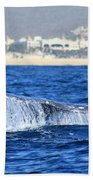 Whale Tail In Cabo Beach Towel