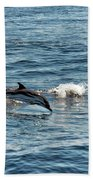 Whale Watching And Dolphins 1 Beach Towel