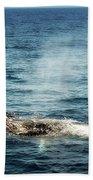 Whale Watching Balenottera Comune 5 Beach Towel