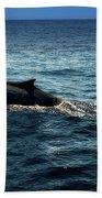 Whale Watching Balenottera Comune 6 Beach Sheet