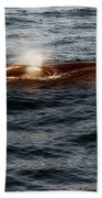 Whale Watching Balenottera Comune 7 Beach Sheet