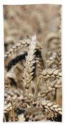 Wheat Close Up Summer Season Beach Towel
